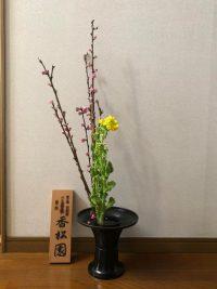 今月の花:2021年2月