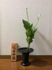 今月のお花:2021年6月